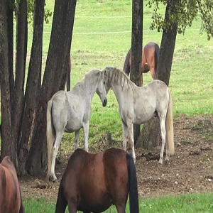 horse shares for sale